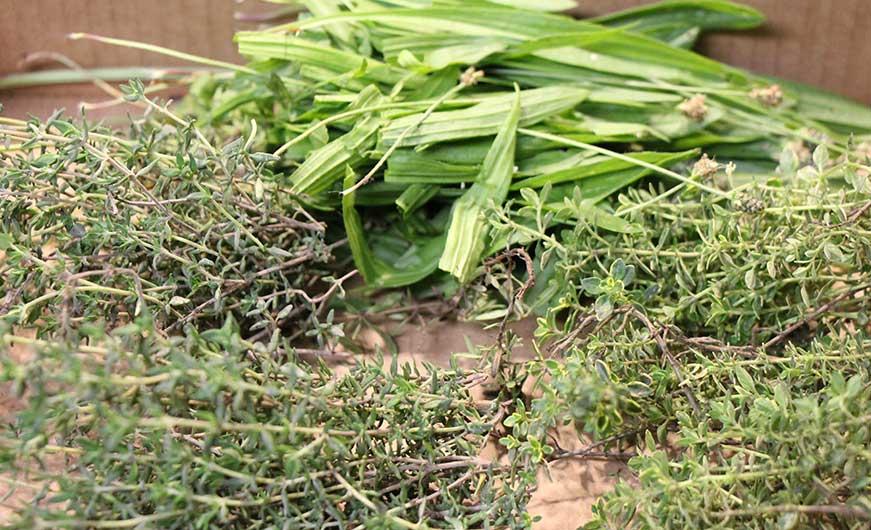 frische Kräuter grün