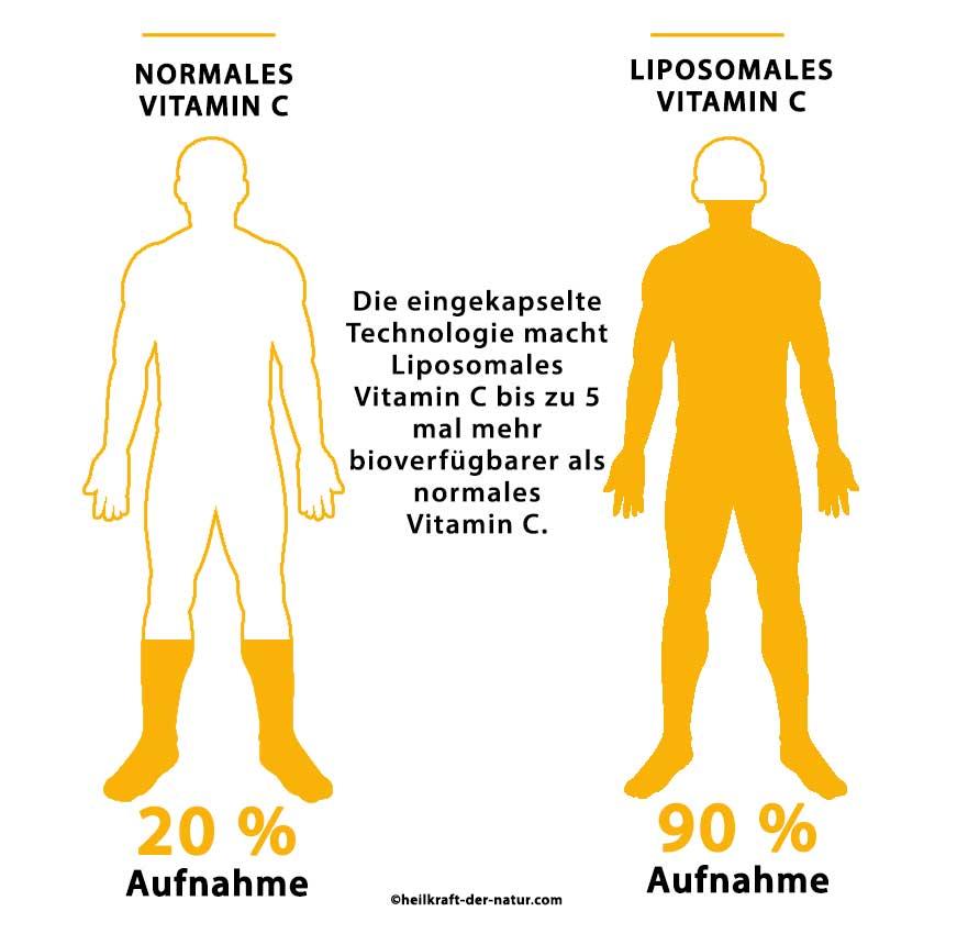Unterschied von liposomalen Vitamin C zu normalen Vitamin C