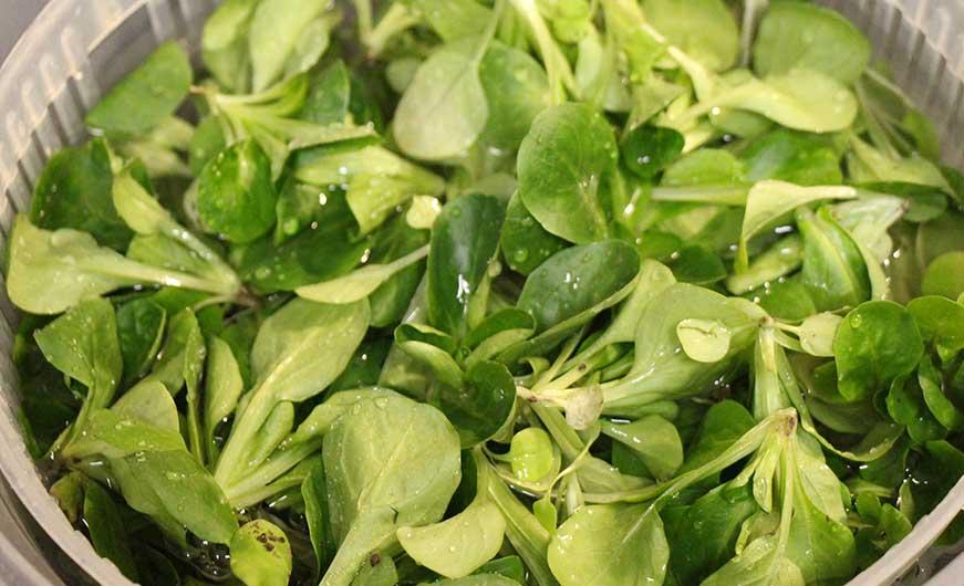 Feldsalat wird gewaschen