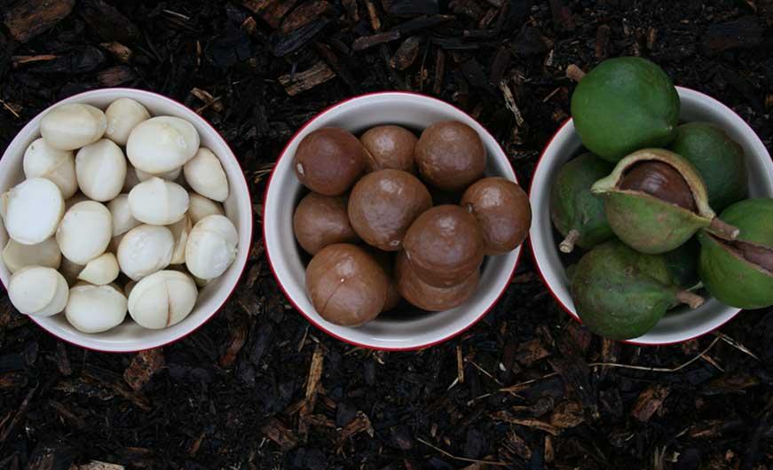 Macadamia mit und ohne Schale
